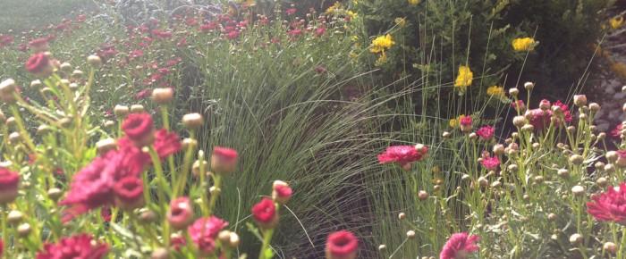 Sara Bendrick Landscape Design